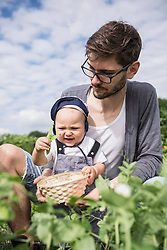 Father and baby boy harvesting pea in community garden, Bavaria, Germany