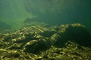 Underwater Scene<br /> <br /> Viktor Vrbovsky/Engbretson Underwater Photography
