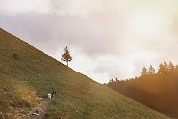 Dog standing on steep hill, Bavaria, Germany