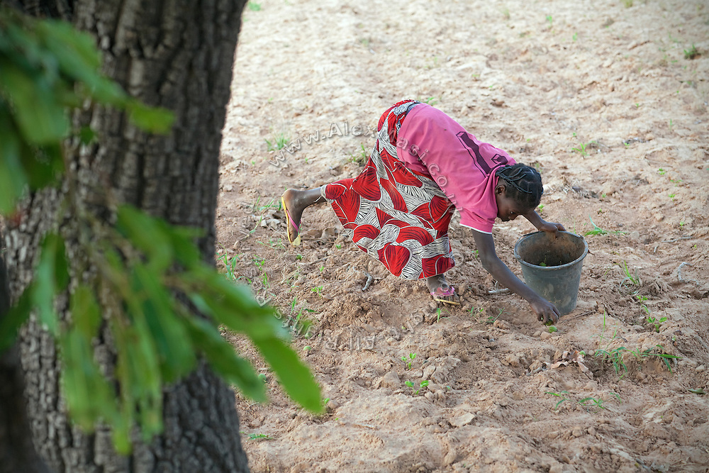 In the early morning, Hassana Ibrahim, 11, is collecting Shea nuts to help supporting her family, before returning to her village to attend school in Boggu, Tamale, northern Ghana.