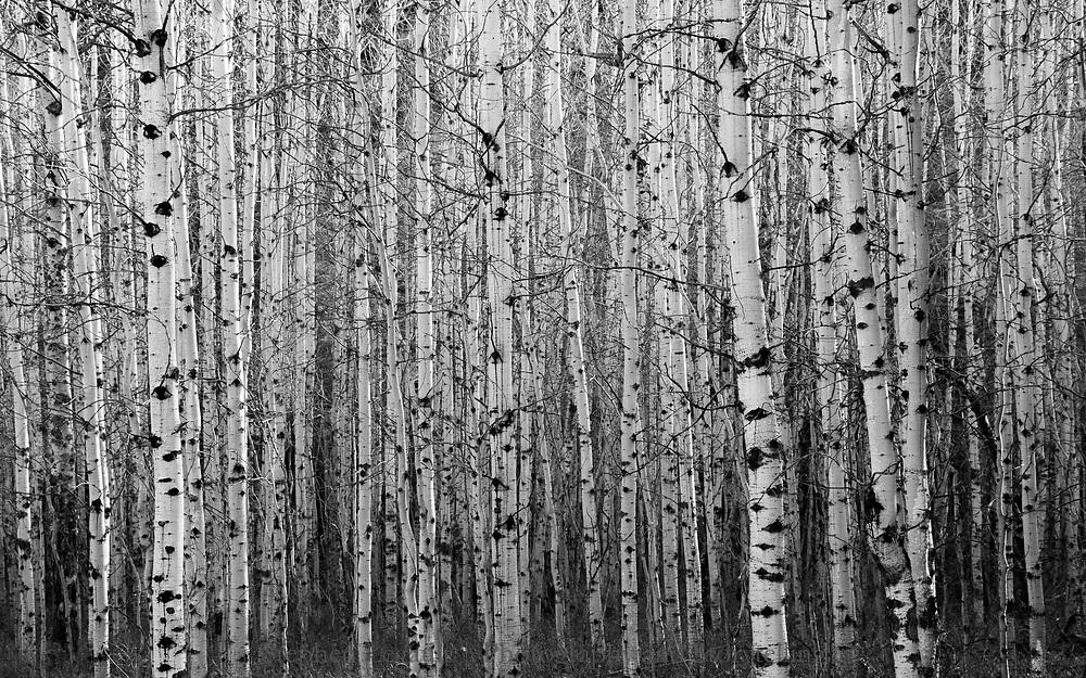 Aspen Grove, Bow Valley, Alberta