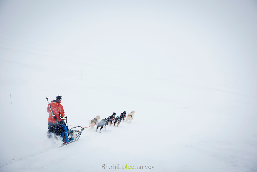 A guide with rifle (for protection against polar bears) sets off on a sleigh with huskies in Spitsbergen. Spitsbergen is the largest island of the arctic archipelago Svalbard, of Norway