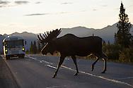 Denali Park Road to Wonder Lake