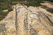 Prehistoric cart ruts tracks in limestone rock at Ta Cenc, Gozo, Malta