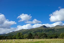 Highland landscape Scotland hills summer sheep
