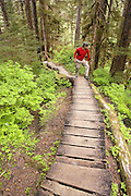 USA, Alaska,A boardwalk on the Rainbow Falls trail leads hikers through the Tongass National Forest on Wrangell Island. MR
