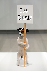 © London News PIctures. 31/01/2012. A taxidermic Jack Russell artwork titled 'I'm Dead (2010)' at a press viewing of exhibition 'Brain Activity, by British artist David Shrigley at the Hayward Gallery, London on January 31st, 2012. Photo credit: Ben Cawthra/LNP