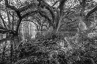 Everglades Gallery Evergldaes johnbobcarlos johnbob Florida