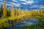 Wetland on the Dempster Highway (KM 210 - 215)<br /> Dempster Highway<br /> Yukon<br /> Canada<br /> Dempster Highway<br /> Yukon<br /> Canada