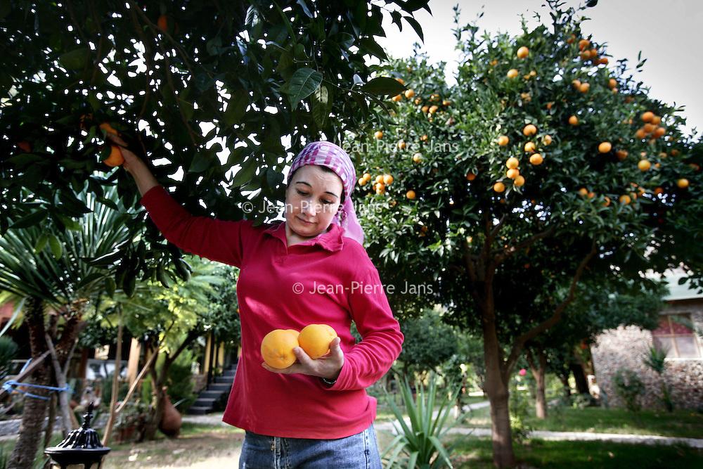 Turkije,Cirali, Antalya ,27 november 2007..Turkse vrouw plukt sinasappels uit haar fruitboomgaard in het Turkse kustplaatsje Cirali...Foto:Jean-Pierre Jans