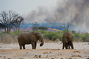 African elephants at a waterhole, Loxodonta africana, in the background a bushfire on the hills surrounding the Savuti Marsh.