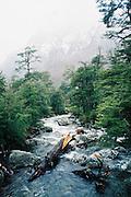 Bosque de invierno Curarrehue / Chile.<br /> <br /> Edición limitada de 10   Fine Art