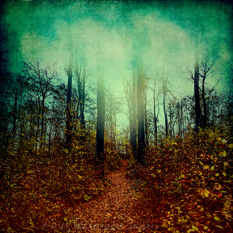 Path through undergrowth with fall foliage in an autumn coloured forest - photograph processed with texture overlays