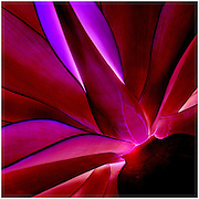 Abstract of plant leaves