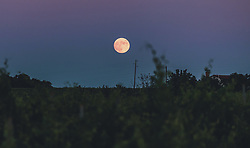 THEMENBILD - der Vollmond geht über den Weinbergen auf, aufgenommen am 04. Juli 2020 in Novigrad, Kroatien // the full moon rises over the vineyards, in Novigrad, Croatia on 2020/07/04. EXPA Pictures © 2020, PhotoCredit: EXPA/ Stefanie Oberhauser
