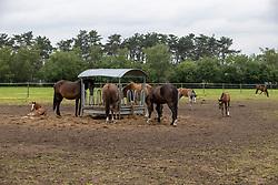 merries met veulens<br /> Stoeterij De Laarse Heide - Zundert 2021<br /> © Hippo Foto - Dirk Caremans<br /> 24/06/2021