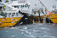 Fishing for herring, Moere coastline, Norway<br /> Model release by photographer