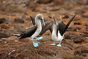 Galapagos | Seymour Norte
