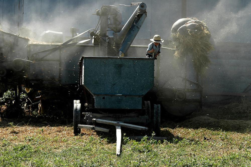 Récolte de l'avoine à la ferme des Miller.<br /> <br /> Miller's farm, oat's harvest and threshing.