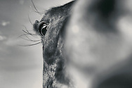 I was taking this picture and horse fogged my lens with its massive nostrils.