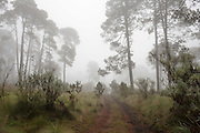 Bosque de Milpa Alta. 21 de septiembre de 2015. (Foto: Prometeo Lucero)