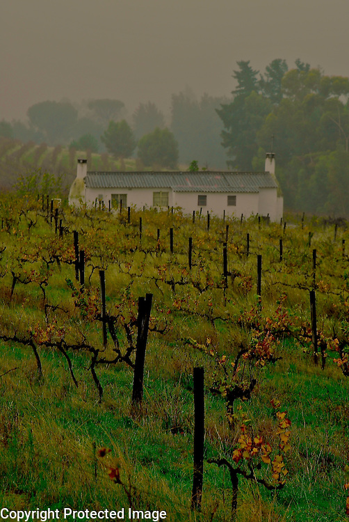 Vines Wellington South Africa