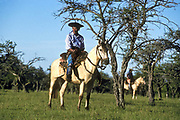 Gauchos hearding cattle into pens, La Estrella ranch, Corrientes, Argentina