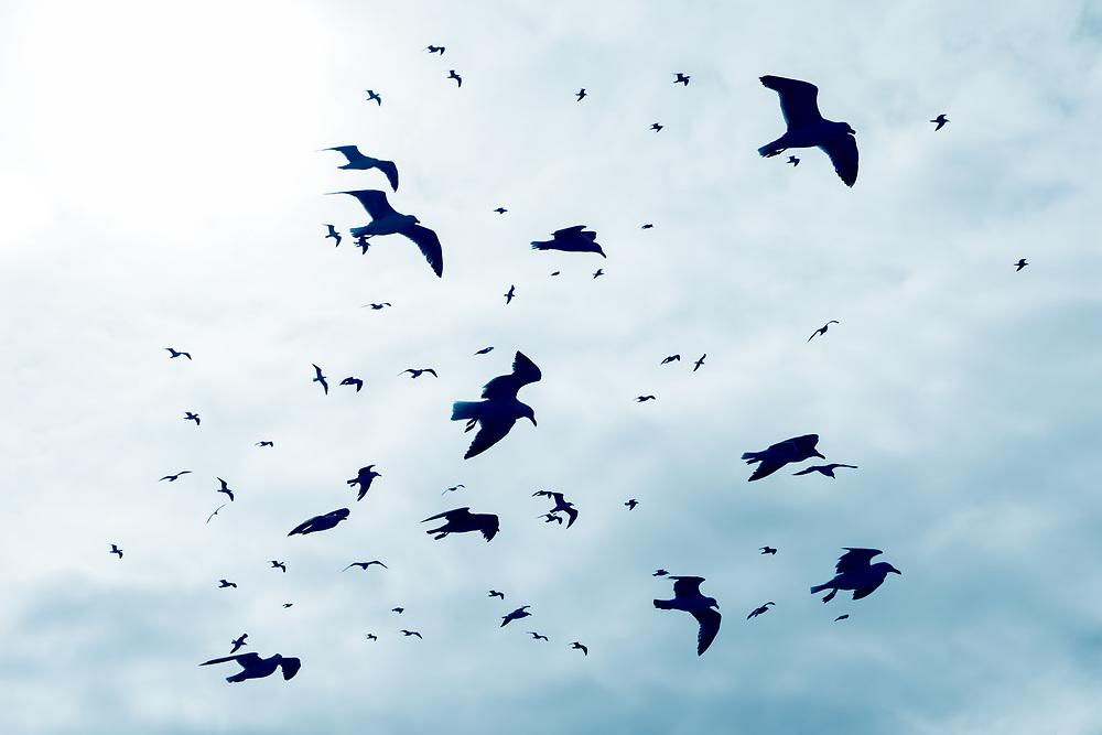 Flying seagulls against sky.
