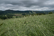 Meadow grassland on agricultural farmland in Shropshire on 9th June 2021 in Bishops Castle, United Kingdom. A meadow is an open habitat, or field, vegetated by grass, herbs and other non-woody plants, often used and harvested when dried in the summer as hay.