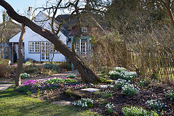 Looking towards the house with Cyclamen coum and snowdrops growing in the borders