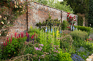 Lupinus, Delphinium and Verbascum phlomoides in the Herbaceous Border at Waterperry Gardens, Waterperry, Wheatley, Oxfordshire, UK