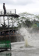 HAIKOU, CHINA - MAY 01: (CHINA OUT) <br /> <br /> Pig Diving<br /> <br /> A pig jumps into a pool at a farm to attract tourists on May 1, 2014 in Haikou, Hainan Province of China. <br /> ©Exclusivepix
