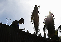 Marie-Lucienne Duvert's husband, Jean-Exsene Felix, repairs the roof on their small home on Oct. 9, 2016 in Morne La Source, Haiti. Photo by Patrick Farrell/Miami Herald/TNS/ABACAPRESS.COM