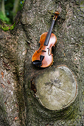 Pictured: The Owen violin.<br /> Violinists were on hand to play at the first public appearance of two instruments made in honour of war poets,  Wilfred Owen and Siegrfried Sassoons.  The violins, crafted by Steve Burnett and insured for £25,000 each, were played at the sycamore tree from which they were made at the Craiglockhart Campus of Napier University in Edinburgh. <br /> Ger Harley   EEm 7 August  2017