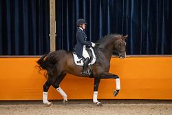 Sekreve Jennifer, NED, Hitmaker<br /> Fotodag KWPN Hengstenkeuring 2021<br /> © Hippo Foto - Dirk Caremans<br /> 06/01/2021