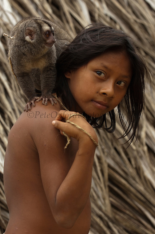 Huaorani Indian girl. - Ene or Yadira Kaiga with her night monkey pet Gabaro Community. Yasuni National Park.<br /> Amazon rainforest, ECUADOR.  South America<br /> This Indian tribe were basically uncontacted until 1956 when missionaries from the Summer Institute of Linguistics made contact with them. However there are still some groups from the tribe that remain uncontacted.  They are known as the Tagaeri. Traditionally these Indians were very hostile and killed many people who tried to enter into their territory. Their territory is in the Yasuni National Park which is now also being exploited for oil.