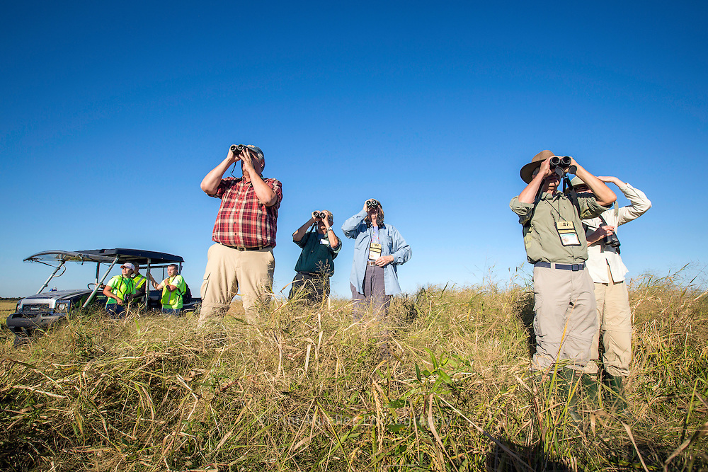 Participants in the Yellow Rails and Rice Festival watch for Yellow Rails in the rice fields of Jefferson Davis Parish near the town of Thornwell, La. During the rice harvesting season the reticent birds are flushed from the field in advance of combines.