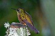 Ecuador, May 24 2010: Images from Cabanas San Isidro...Copyright 2010 Peter Horrell