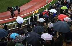 Racegoers watch the parade ring during day one of the November Meeting at Cheltenham Racecourse, Cheltenham