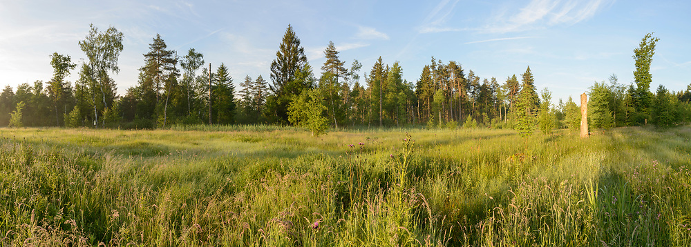 Impressionen aus dem Hudelmoos, einem Ried- und Naturschutzgebiet zwischen Amriswil und Bischofszell an einem klaren Morgen im Juni