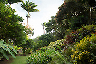 A profusion of tropical plants including Roystonea regia (Royal Palm), Magnifera indica (Mango), Cordiaeum variegata and Heliconia in The Tower Garden, St. Paul's, Grenada, the Caribbean, West Indies