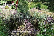 65821-00201 Fishnet Stockings Coleus (solenostemon scutellarioides Plectranthus 'Fishnet Stockings'), Lavender Cat's Whiskers (Orthosiphon stamineus) Terrace Garden at Sarah P. Duke Gardens, Durham, NC