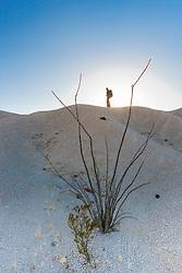 Hiker silhouetteon ridge of volcanic tuff near Tuff Canyon, Big Bend National Park, Texas, USA.
