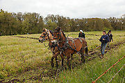USA, Oregon, Champoeg State Park, mustang team moving into position during plowing competition
