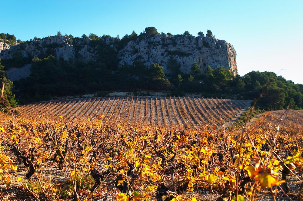 La Clape. Languedoc. Vine leaves. Vineyard. France. Europe. Vineyards below the white limestone cliff.