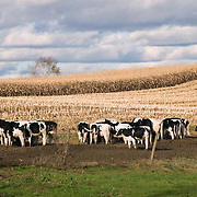 Dairy Farm in the Hudson Valley, New York