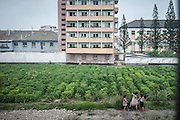 Exclusive<br /> The North Korea that Kim doesn't want you to see: Sweeping dirt under the watch of soldiers, fearful waitresses and unlit streets among fascinating illegal images of rogue state <br /> <br /> A daring photographer has risked detention to smuggle a series of stunning images of North Korea out of the secretive state.<br /> Michal Huniewicz captured the photographs he knew Kim Jong-un would not want you to see during a trip to the country, before sneaking them out on hidden memory cards.<br /> Unlike the polished photographs peddled by the state-run news agency, Mr Huniewicz's images give a raw insight into a poverty-ridden country controlled by a dictator. <br /> He went to North Korea from China last year and travelled with a tour guide - one of the conditions of being allowed a visit.<br /> Mr Huniewicz evaded his minder's watchful eye to take these photographs, which give a unique glimpse into North Koreans' everyday lives.<br /> Some are pictured working in the fields, while others are seen working in the squeaky-clean capital, Pyongyang.<br /> In one image, street cleaners sweep pavements under the watchful eye of a soldier in one of Pyongyang's parks, and others reveal waitresses working in restaurants where propaganda images are broadcast around the clock on television.<br /> A photograph of a customs form reveals what cannot be brought into the country. Mr Huniewicz revealed laptops are searched for the Hollywood film The Interview, a comedy about Kim Jong-un, which is banned in North Korea<br /> ©Michal Huniewicz /Exclusivepix Media