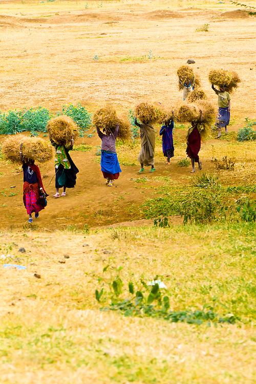 Tanzanian women carrying hay, Tanzania