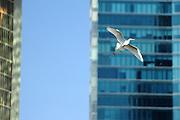 Garza en Punta Pacífica / aves de Panamá.<br /> <br /> Edición de 5 | Víctor Santamaría.
