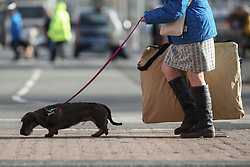 © Licensed to London News Pictures. 09/03/2017. Birmingham, UK. A woman and her small dog arrive at the 126th annual Crufts dog show at the NEC in Birmingham, West Midlands. The show is organised by the Kennel Club and is the biggest of it's kind in the world.  Photo credit : Ian Hinchliffe/LNP